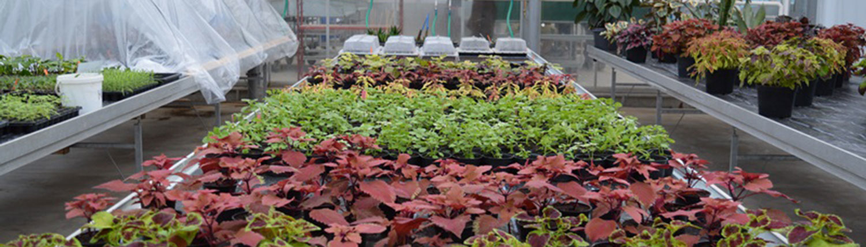 Gärtner Zierpflanzenbau Ausbildung